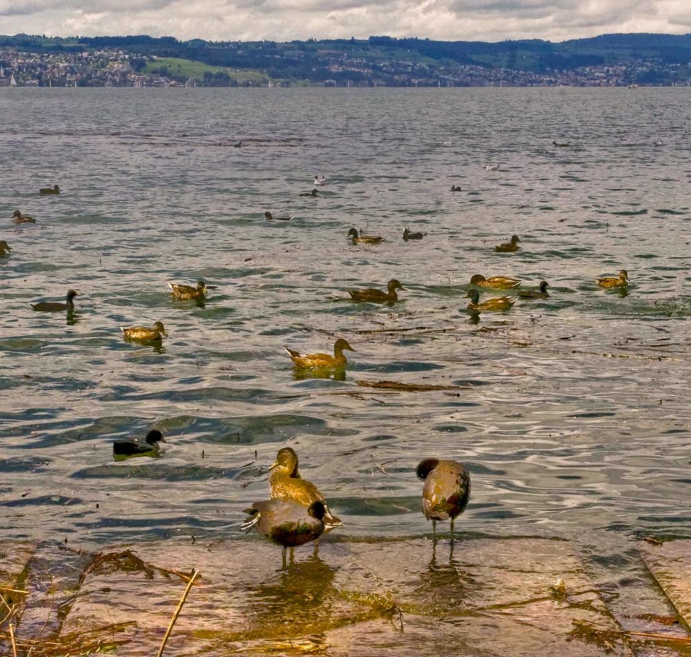 Lago de Zurich_1024