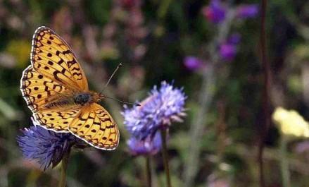cropped-mariposas2.jpg